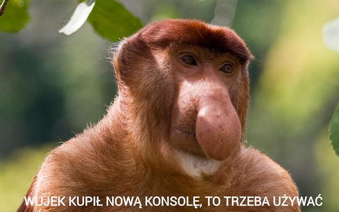 nosacz2
